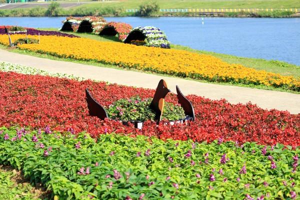 走春走進花海裡!北市河濱公園春節滿花香