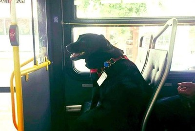 憨狗狗每天搭霸王車 目的地很爆笑