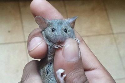 他逮到老鼠卻捨不得殺 PO網釣出同好