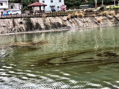 新北瑪鋉溪漂惡臭廢油!漁民撈鰻苗工具被汙染氣炸