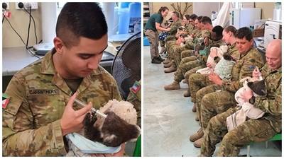 自願犧牲休息時間!救災軍人改當「無尾熊保母」 手抱燒傷動物幫餵食