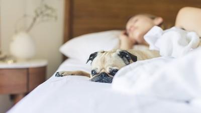 睡眠不足是百病之源!美國實驗證實「睡不好易感冒」 增強免疫力先睡飽