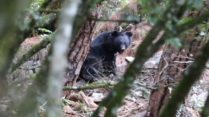 《黑熊來了》Formosan B.B. is Coming - 從熊到人,從有知到無知