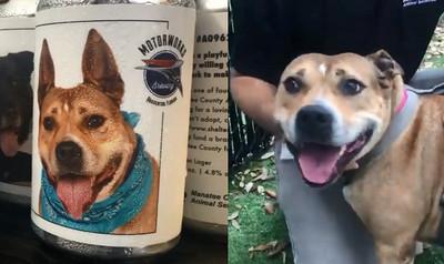 啤酒罐印狗照片 她找回愛犬淚崩