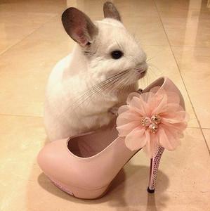 超萌鼠鼠小公主BOBO充實的一天
