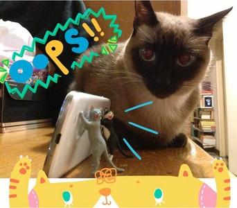 「貓咪手機撐」先走吧,這裡我來擋著