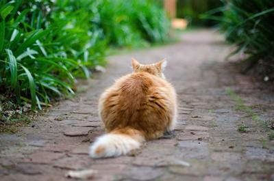 愛貓遭撞斃3年後接電話「貓還活著」