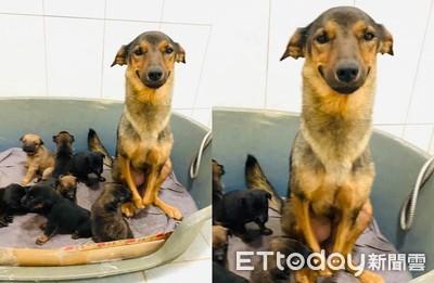 斷腳狗媽產8寶寶 露出無敵微笑