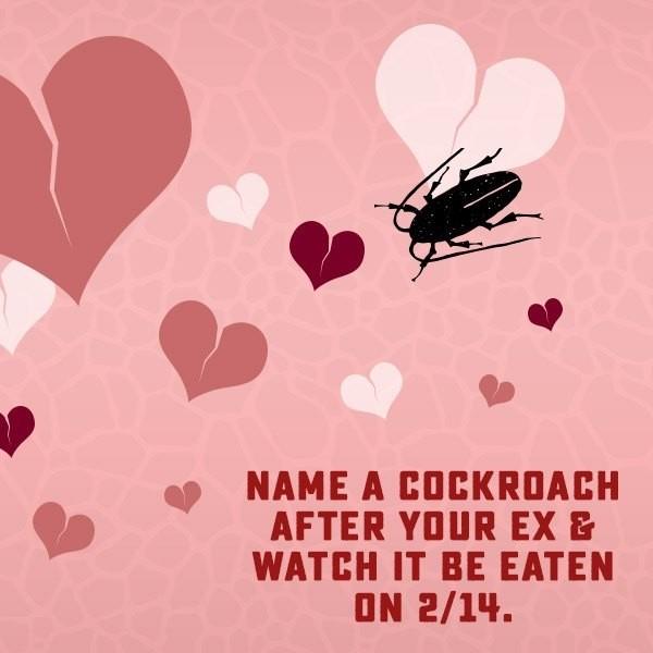 只要120元!動物園開放「給蟑螂取前任名字」 情人節無碼放送餵蛇秀❤