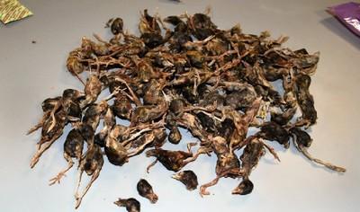 帶「小鳥屍體」過海關 北京客:是貓糧
