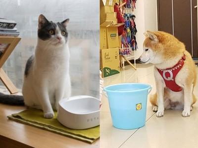寵物異味容易增加細菌滋生!