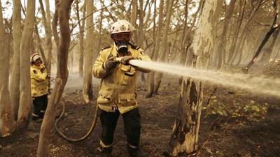 感謝所有消防員!澳政府「疫情中傳來好消息」:野火控制住了!