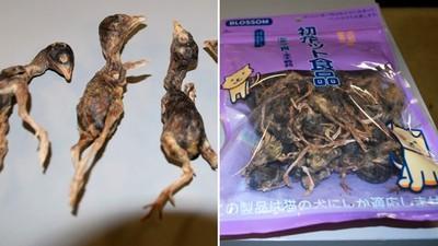 又偷帶野味!美國海關搜出「鵪鶉肉乾」北京旅客急辯:給貓吃的