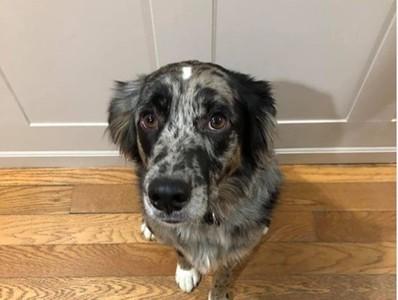 狗狗在家突然石化 理由「很找屎」