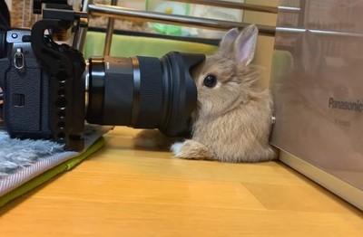 兔寶太習慣鏡頭 督多近都無所謂了