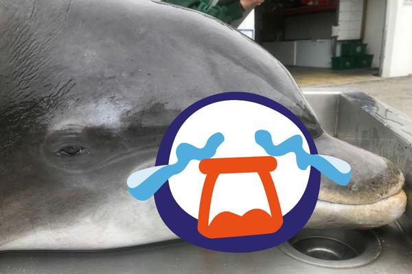 佛州海豚遭槍決「口鼻大洞貫穿」 警懸賞20000美金緝凶