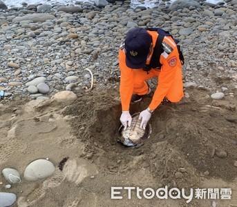 岸際第8起海龜不明死亡 海巡籲勿丟棄人工垃圾