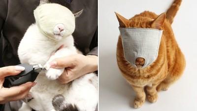 給喵皇戴上「剪爪面罩」遮眼變超乖~貓奴終於不再滿手血痕!