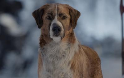 不可不知的狗暗示 看完這部秒懂狗狗的內心世界