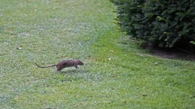 拍下老鼠搶麵包屑「釘孤枝」   攝影師趴倫敦地鐵7天獲大獎