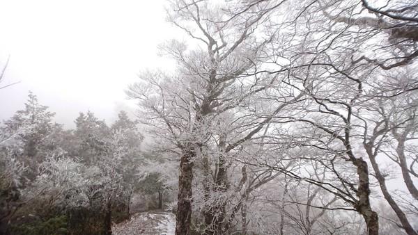 ▲▼全台急凍冷吱吱,霧淞、結霜讓18日宜蘭太平山如北國夢幻銀白仙境。(圖╱羅東林管處提供,下同)