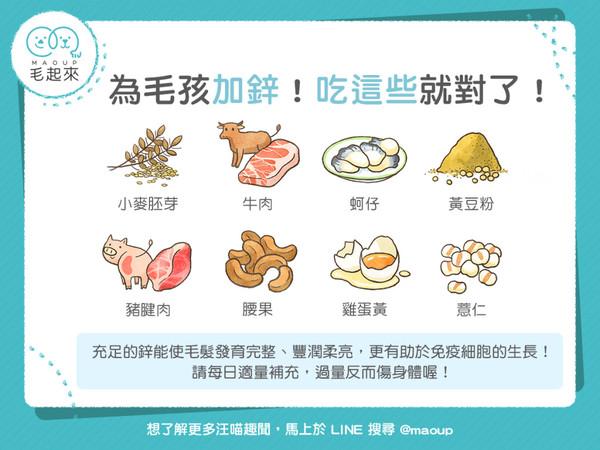 蚵仔、肉還不夠!「想補鋅」選這8食物…毛孩吃了髮順柔量