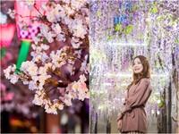 不出國也能賞櫻! 三井OUTLET打造「紫藤花海」與「櫻花神社」打卡美翻