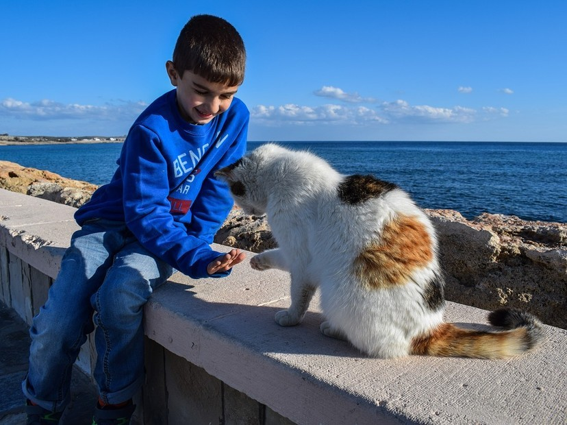 女鏟屎官抱怨「貓咪更喜歡黏著男生」 網分析原因:味道比較重!