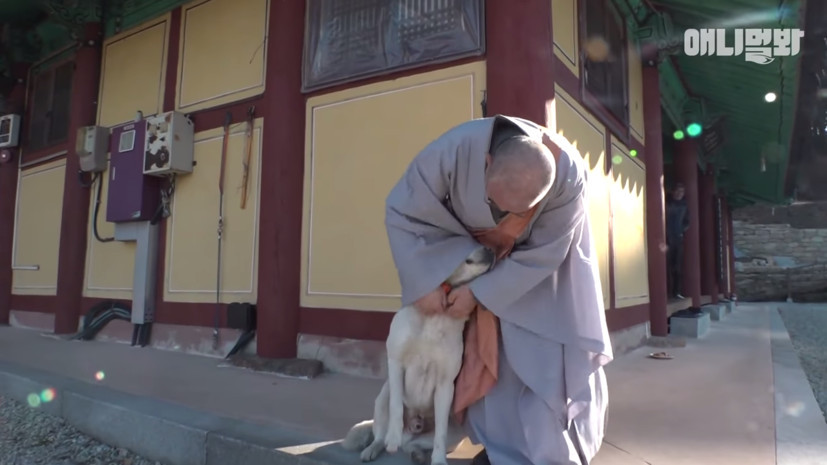 寺廟狗有兩副面孔!佛祖前什麼都不吃…背著主人衝下山偷吃牛肉餅