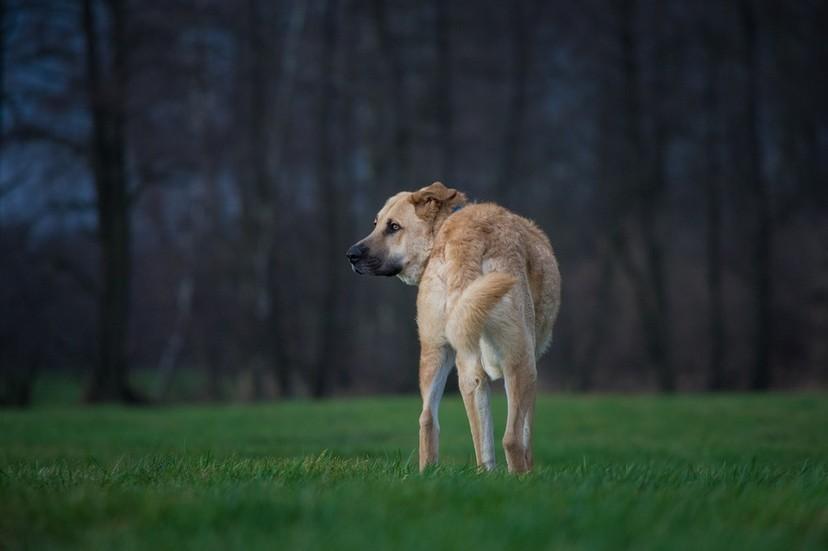 如果可以,你願意將自己的壽命分5年給狗狗嗎?網友的回答似乎不意外