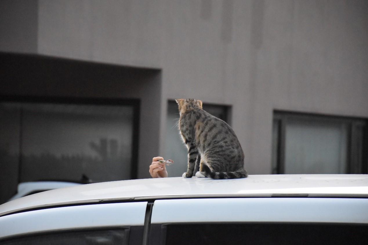 ▲你相信貓咪會飛嗎?。(圖/台灣之心提供,請勿隨意翻拍,以免侵權。)