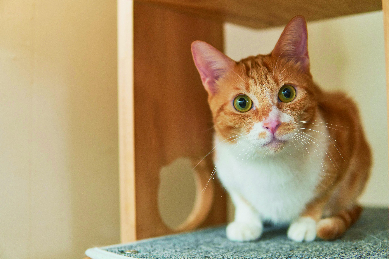 ▲▼書籍《好味小姐的日常貓鮮食料理:簡單、快速、便宜、方便,輕鬆做出營養均衡貓鮮食正餐!》。(圖/布克文化提供,請勿隨意翻拍,以免侵權。)