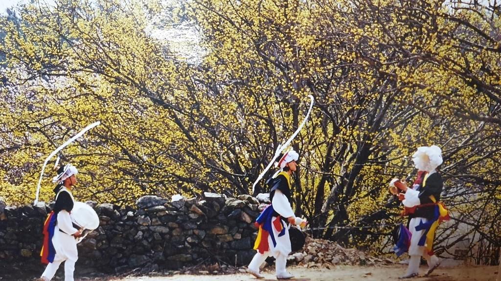 ▲▼利川市曾舉辦山茱萸花季(圖/翻攝自利川文化觀光官網)