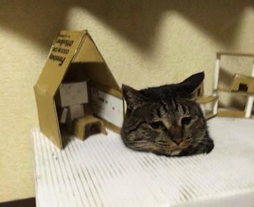 用紙箱幫貓咪蓋房子,牠怎麼有點無奈