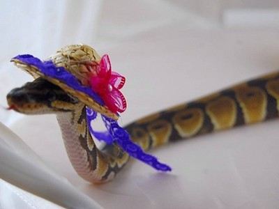 給我親愛的蛇蛇戴帽帽,超可愛der~~