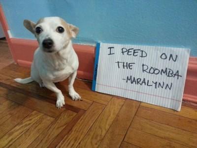 狗狗們總是犯下令人哭笑不得的錯...