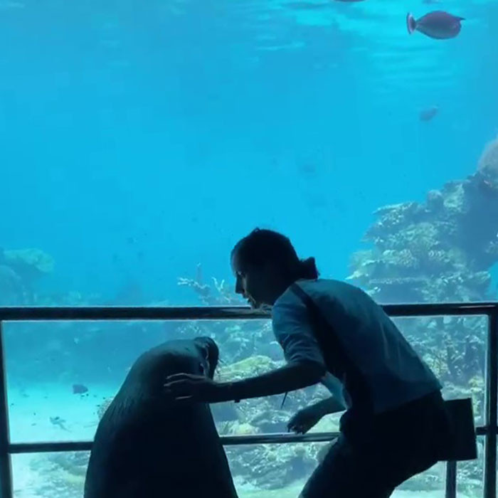 ▲▼澳洲海生館海獅。(圖/翻攝自Facebook/Sea World - Gold Coast, Australia)