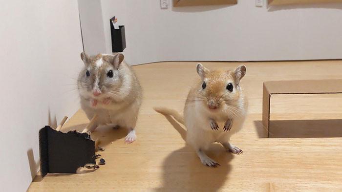 ▲▼沙鼠博物館(圖/翻攝自推特/Filippo Lorenzin)