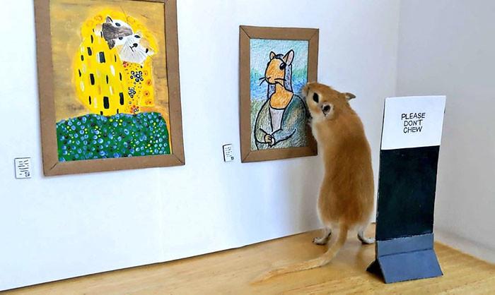 ▲▼▲▼沙鼠博物館(圖/翻攝自推特/Filippo Lorenzin)