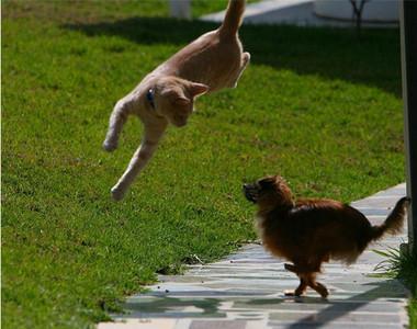 毛小孩躍起瞬間,是最難拍的珍貴畫面