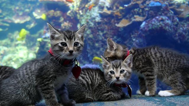 ▲▼貓咪遊水族館。(圖/翻攝自Twitter/帳號名稱GeorgiaAquarium)
