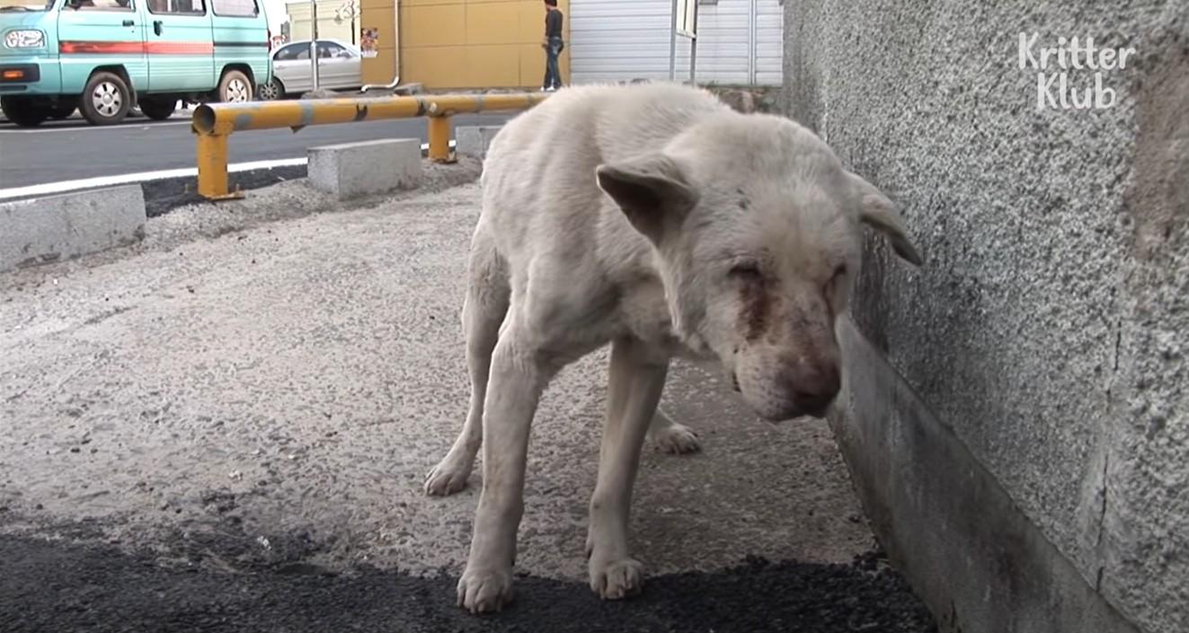 ▲▼奶奶過世兩年,狗狗每天逃家出門找她(圖/翻攝自YouTube/KritterKlub)