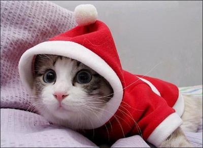融化你的心!超萌聖誕喵喵來發禮物啦