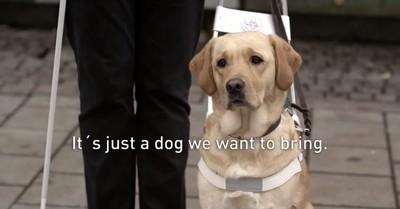 如果導盲的動物不是狗,世界可能毀了