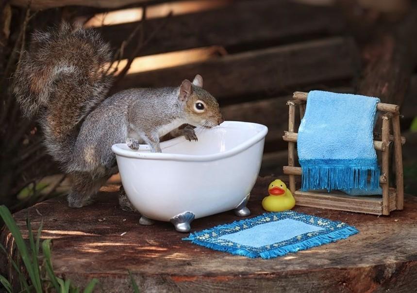 ▲▼攝影師為松鼠DIY製可愛傢俱。(圖/翻攝自Facebook/Sharon Cutler)