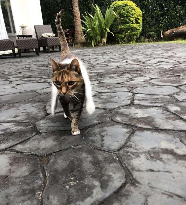 ▲▼愛圍圍巾的貓咪(圖/翻攝自The Dodo)