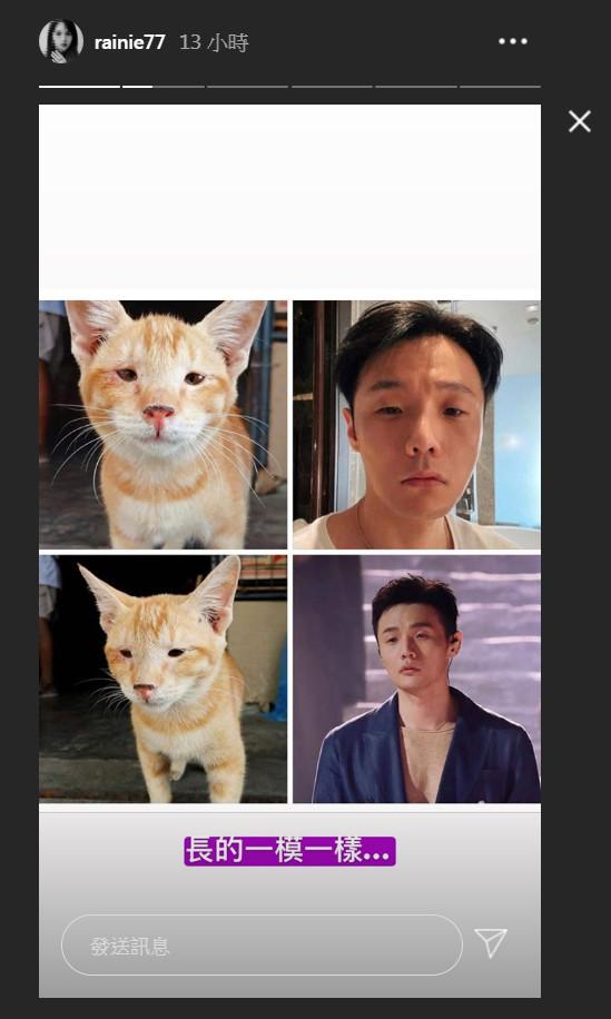 ▲楊丞琳笑說貓咪和李榮浩長得一模一樣。(圖/翻攝自楊丞琳IG)