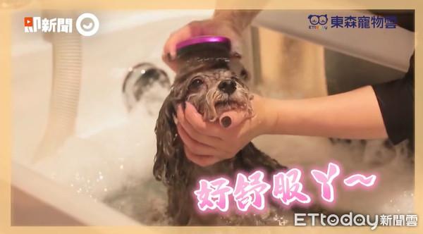 毛孩即家人!劉淑蕙邀「烏骨雞」體驗洗澡 舒服到瞇眼