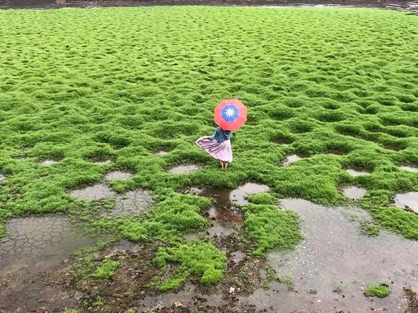 嘉義出現「洞洞草原」