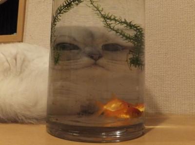 哪種動物最會顏藝?當然非貓咪莫屬!